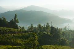 Schöne Teeplantage und -Berglandschaft bei Sonnenaufgang Lizenzfreie Stockbilder