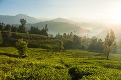 Schöne Teeplantage und -Berglandschaft bei Sonnenaufgang Stockbilder