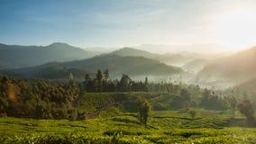 Schöne Teeplantage und -Berglandschaft bei Sonnenaufgang Lizenzfreies Stockfoto