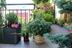 Schöne Terrasse mit vielen Blumen Stockbild