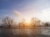 Schöne tote Bäume stockbild