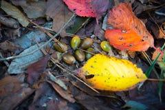 Schöne tote Blätter, Kastanien und Eicheln stockfotografie