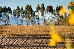 Schöne trockene Landschaft der Andenhochländer herein Lizenzfreies Stockfoto