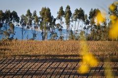 Schöne trockene Landschaft der Andenhochländer herein Stockbilder