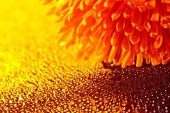 Schöne Tropfen des Wassers und der orange Blume Lizenzfreie Stockbilder
