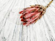 Schöne tropische Blume Proteanahaufnahme auf hölzernem Hintergrund stockfoto