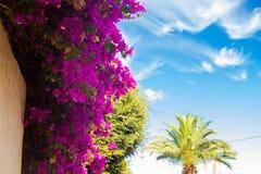 Schöne tropische Blumen Stockfotografie