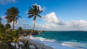 Schöne tropische Küstenlinie mit Palmen und Klippen Lizenzfreies Stockfoto