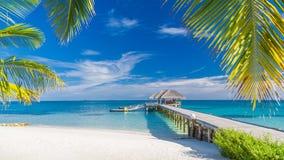Schöne tropische Landschaft Malediven-Inselstrand- und -palmen Perfekte tropische Fahne lizenzfreies stockbild