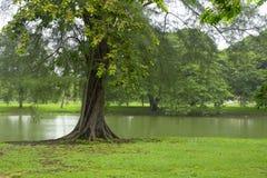 Schöne tropische Natur, blauer Himmel und traditionelles Boot umgeben durch Wasser und Grünpflanzen Stockfotos