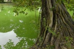 Schöne tropische Natur, blauer Himmel und traditionelles Boot umgeben durch Wasser und Grünpflanzen Lizenzfreie Stockbilder