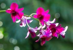 Schöne tropische purpurrote Blumen Lizenzfreies Stockfoto