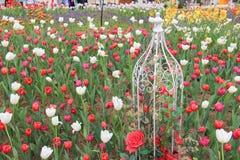schöne Tulpenblumen im Garten stockfoto