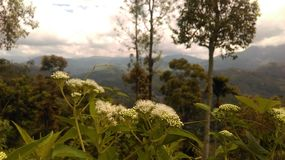 Schöne Umwelt in Sri Lanka lizenzfreie stockfotografie