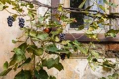 Schöne und alte Stadt von Tiflis Lizenzfreie Stockfotos