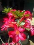 schöne und blühende rote Blumen stockfoto