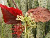 Schöne und bunte Blätter mit zwei Farben stockbilder