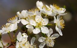 Schöne und bunte Blume Lizenzfreies Stockbild