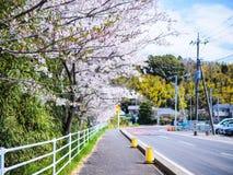 Schöne und colorfull Kirschblüte, Kirschblüte lizenzfreies stockfoto