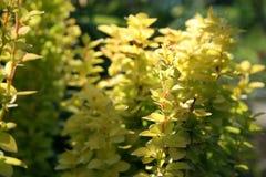 Schöne und empfindliche Blumen Stockfoto