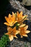 Schöne und empfindliche Blumen Stockfotos
