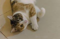 Schöne und hübsche Katze mit großen Augen lizenzfreie stockbilder