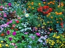 Schöne und helle Ausstellungsblumen-cc$ii Lizenzfreie Stockfotos
