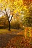 Schöne und helle herbstliche Bäume im schottischen Park mit Nachmittagssonnenlicht Lizenzfreies Stockfoto