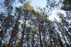 Schöne und hohe Bäume herum stockfotografie