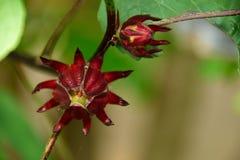 Schöne und merkwürdige Blume Lizenzfreie Stockfotografie