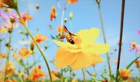 Schöne und romantische Blume Stockbild