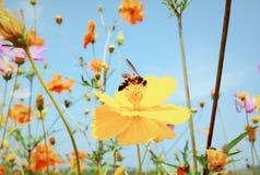 Schöne und romantische Herbstblume lizenzfreies stockbild