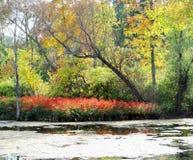 Schöne und Suddle warme Töne des Herbstes stockbilder