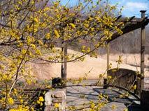 Schöne und vibrierende gelbe Blumen, die den Eingang zu einem Wetter und zu einer gealterten Brücke hervorheben lizenzfreie stockbilder