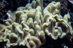 Schöne Unterwasseranlagen Lizenzfreie Stockfotografie