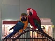 Schöne Vögel stockbild