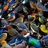 Schöne Vögel auf tope herein zu faszinierter Beschaffenheit für lizenzfreies stockbild