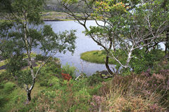 Schöne Vegetation nahe oberem See Lizenzfreie Stockbilder