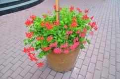 Schöne, verschiedene Blumen stockfoto