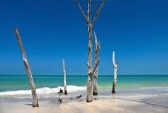 Schöne verwitterte tote Bäume Stockfotos