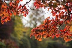 Schöne vibrierende Herbstlandschaftswaldlandschaft am Morgen Stockfotos
