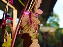 Schöne vibrierende Zimmerpflanzen am Fenster lizenzfreies stockbild