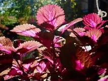 Schöne vibrierende Zimmerpflanzen am Fenster lizenzfreie stockfotografie