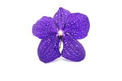 Schöne violette Orchidee Stockfotografie