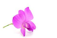 Schöne violette Orchidee Lizenzfreie Stockfotos