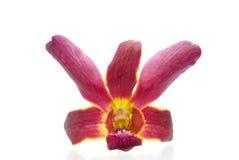 Schöne violette Orchidee Stockfoto