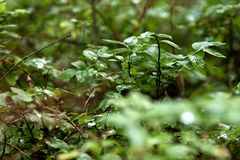 Schöne Waldlandschaft Stockbilder