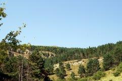 Schöne Waldlandschaft in den Bergen, majestätische szenische Ansicht an einem sonnigen Tag Lizenzfreie Stockfotos