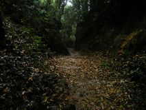 Sch?ne Waldlandschaft im Wald stockfotografie