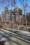 Waldschatten im Frühjahr Lizenzfreies Stockfoto